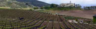 escondido ca winery vineyard